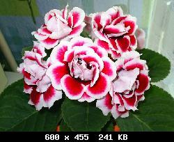 Автор: Admin Дата: 02.11.2013 Описание: 11 мар 2011 Цветок глоксинии состоит из 6 лепестков, соединенных между собой.