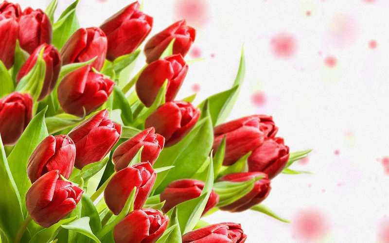 Эти тюльпаны для ВАС. Обсуждение на LiveInternet - Российский Сервис Онлайн-Дневников